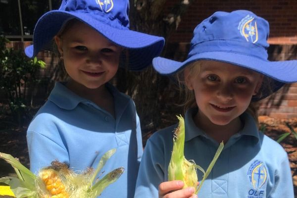 Our Lady of Fatima Primary School Caringbah- News- Vegetable Garden